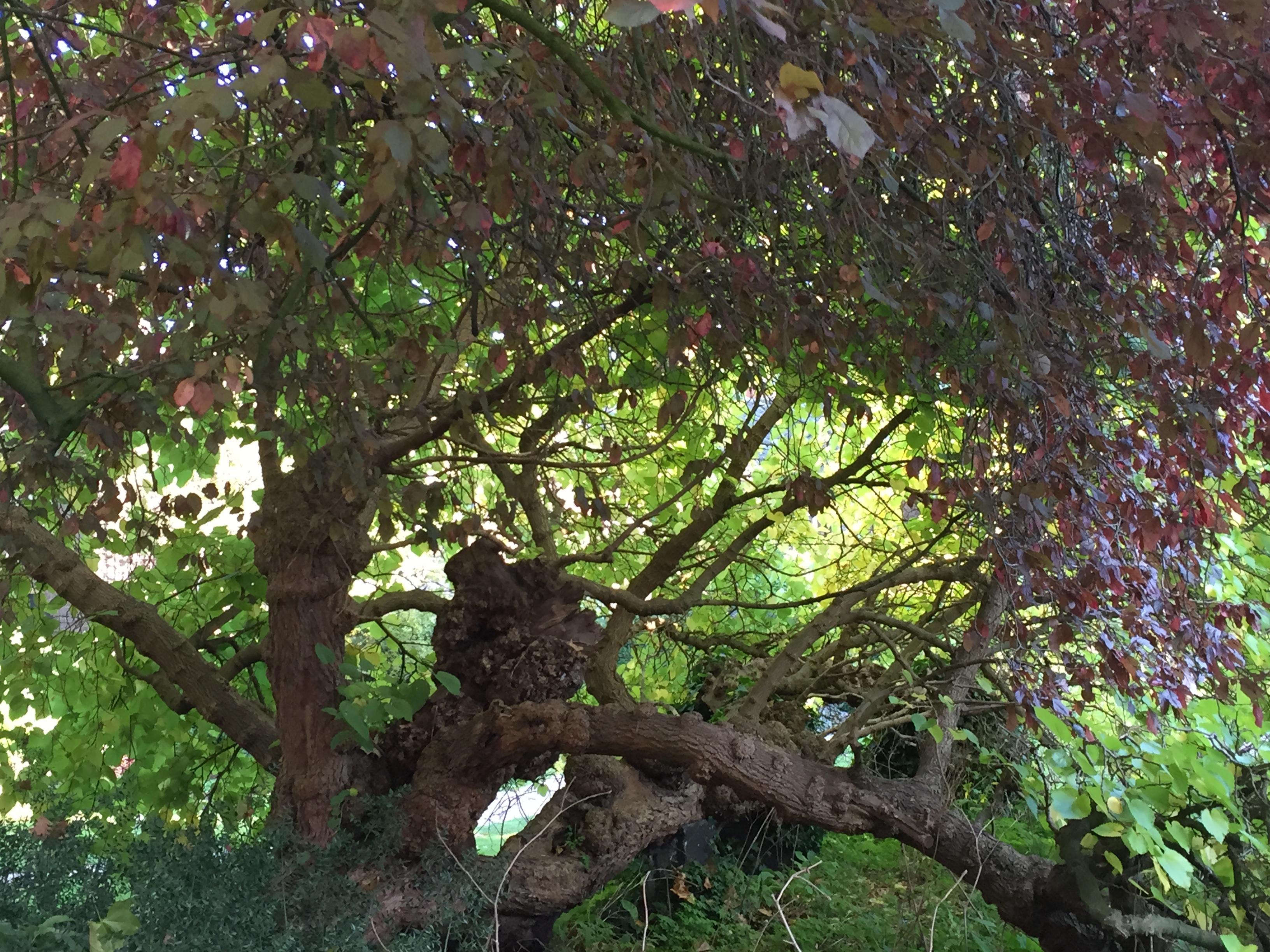 Keats House Garden